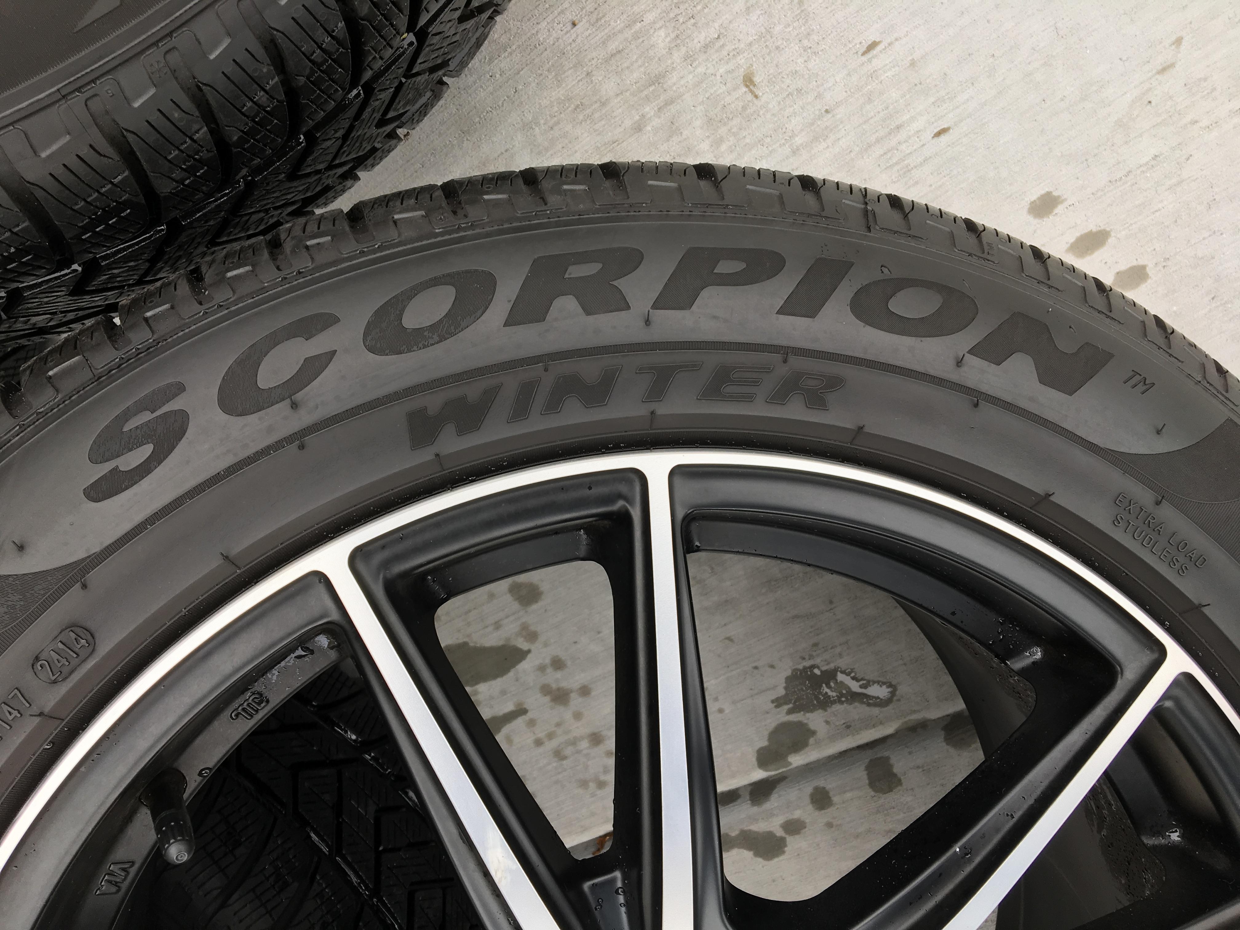 Scorpion Detail